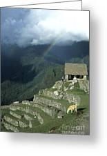 Llama And Rainbow At Machu Picchu Greeting Card by James Brunker