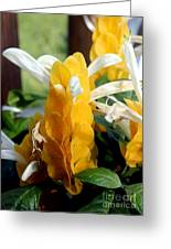 Lollipop Plant Greeting Card by Kathy  White