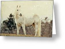 Lone Horse Greeting Card by Diane Miller
