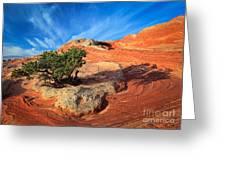 Lone Juniper Greeting Card by Inge Johnsson