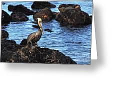 Lone Pelican On Rocks Greeting Card by Susan Wiedmann