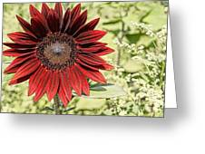 Lone Red Sunflower Greeting Card by Kerri Mortenson