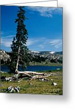Lone Tree At Pass Greeting Card by Kathy McClure
