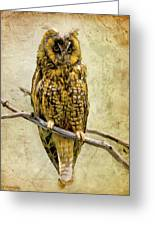 Long Eared Owl Greeting Card by Ray Downing