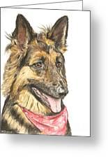 Long Haired German Shepherd In Red Bandana Greeting Card by Kate Sumners