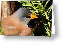 Long-tailed Finch Greeting Card by Margaret Saheed