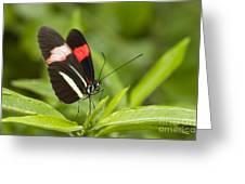 Longwing On A Leaf Greeting Card by Bryan Keil