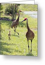 Looking For A Handout Greeting Card by Carol Groenen