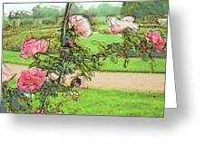 Looking Through The Rose Vine Greeting Card by Stephanie Hollingsworth
