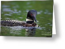 Loon Feeding Chick Greeting Card by Jim Block
