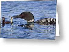 Loon Offers Fish to Chick Greeting Card by Jim Block