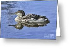 Loon On Vacation Greeting Card by Deborah Benoit