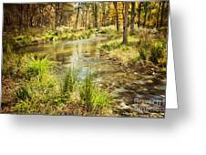 Lost Creek In Autumn Morning Greeting Card by Iris Greenwell