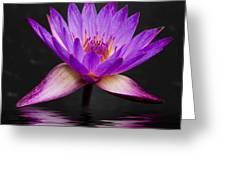 Lotus Greeting Card by Adam Romanowicz