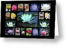 Lotus Cluster Greeting Card by Debra     Vatalaro