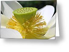 Lotus Flower With Pod Greeting Card by Eva Kaufman