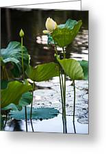 Lotuses In The Pond Greeting Card by Jenny Rainbow