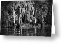 Louisiana Bayou Greeting Card by Mountain Dreams