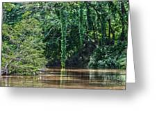 Louisiana Bayou Toro Creek Swamp Greeting Card by D Wallace