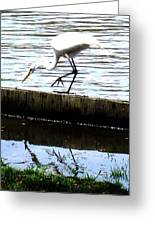 Louisiana Wildlife Greeting Card by Robin Lewis