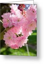 Lovely Cherry Blossom Greeting Card by Iryna Soltyska