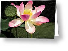 Lovely Lotus Blossom Greeting Card by Penny Lisowski