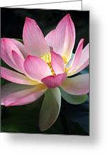Lovely Lotus Greeting Card by Elvira Butler