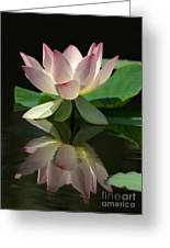 Lovely Lotus Reflection Greeting Card by Sabrina L Ryan