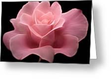 Lovely Pink Rose Greeting Card by Nina Bradica
