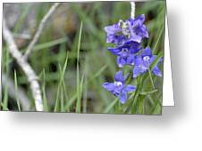 Low Larkspur In Yellowstone National Park Greeting Card by Bruce Gourley