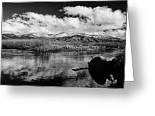 Lower Owens River Greeting Card by Cat Connor