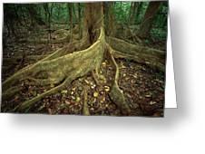 Lowland Tropical Rainforest Greeting Card by Ferrero-Labat