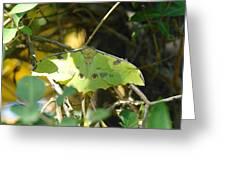 Luna Moth In The Sun Greeting Card by Jeff  Swan