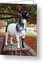 Lunch With Goat Greeting Card by Rona Black