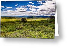 Lush Landscapes Greeting Card by Tony Boyajian