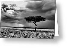 Maasai Mara In Black And White Greeting Card by Amanda Stadther