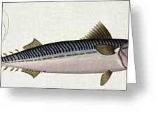 Mackerel Greeting Card by Andreas Ludwig Kruger