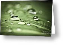 Macro Raindrops On Green Leaf Greeting Card by Elena Elisseeva