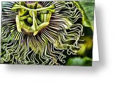 Mad Passion Greeting Card by Peggy J Hughes