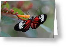 Madiera Butterfly Greeting Card by Juergen Roth