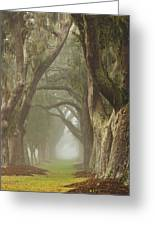 Magic Forest Greeting Card by Barbara Marie Kraus