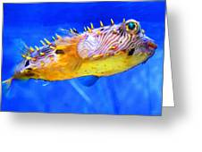 Magic Puffer - Fish Art By Sharon Cummings Greeting Card by Sharon Cummings