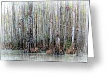 Magical Bayou Greeting Card by Carol Groenen