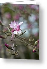 Magnolia Blossom In Tree 3 Greeting Card by Rebecca Cozart