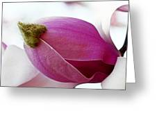 Magnolia Blossom With Cap Greeting Card by Lisa Phillips