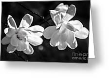 Magnolia Flowers Greeting Card by Elena Elisseeva