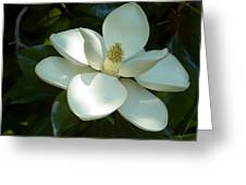 Magnolia Greeting Card by Frank Tozier