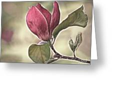 Magnolia Glow Greeting Card by Susan Candelario