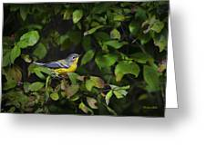Magnolia Warbler Greeting Card by Christina Rollo