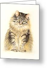 Maine Coon Cat Greeting Card by Bonnie Rinier
